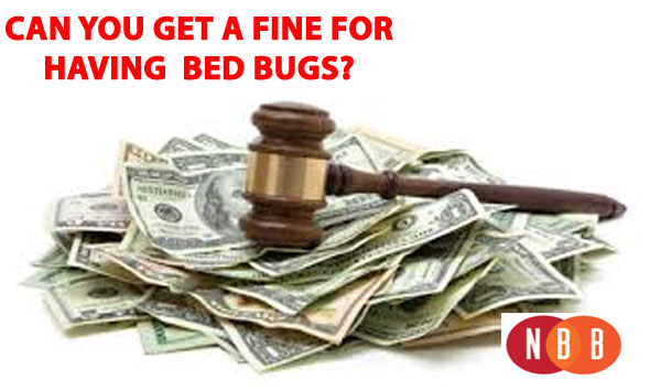 BedBugFine