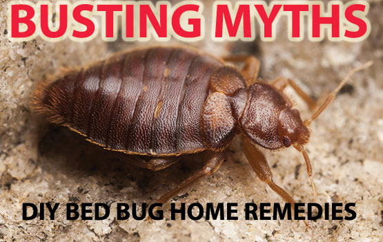 DIY Bed Bug Home Remedies