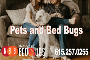 pets and bugs